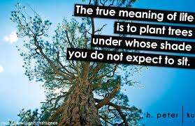 the true meaning of is to plant trees whose shade you