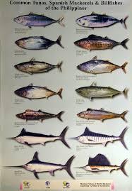 types of fish aquarium 3 common tropical aquarium fish first