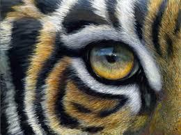 tiger eye finberg