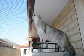 cat enclosures and cat fences with photos cat world