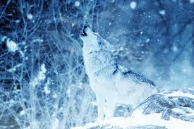 getting in touch with nature wolf and moon jewelry trends