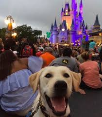 Pet Friendly Hotels With Kitchens by 475 Best Pet Friendly Destinations Images On Pinterest Your Dog