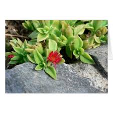small red flowers greeting cards zazzle