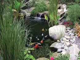 211 best pond ideas images on backyard ponds fish