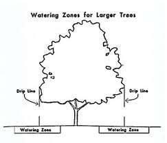 beginners guide for watering new trees