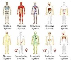 best 25 human body systems ideas on pinterest systems of human