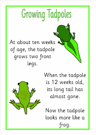 life cycle of frog eyfs ks1 sen topic resources powerpoints