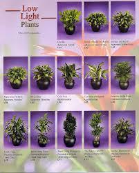 best light for plants bathroom bathroom bestw light plants for bathrooms bathroombest