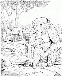 beautiful monkey coloring book with monkey coloring page