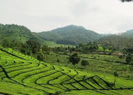 Teh Walini 10 lokasi prewedding di bandung kebun teh walini my future