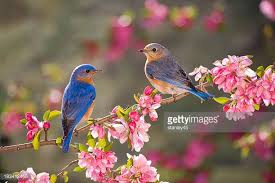 birds images Bird stock photos and pictures getty images