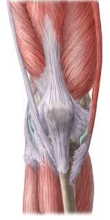 Nerves In The Knee Anatomy Knee And Leg Anatomy Study Guide Kenhub