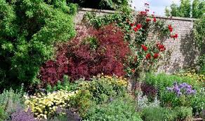Cool Small Palnts To Grow Alan Titchmarsh On Growing Plants Against A Wall Garden Life