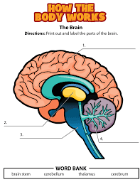 brain activity png lekser kroppen pinterest brain
