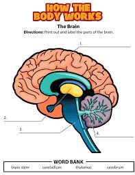 Nervous System Human Anatomy Brain Activity Png Lekser Kroppen Pinterest Brain