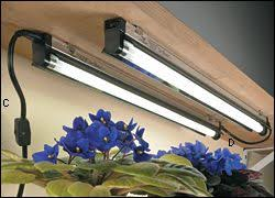 grow lights for indoor herb garden 44 best herb cabinet images on pinterest herbs garden medicinal