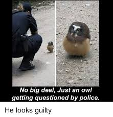White Owl Meme - search white owl memes on me me