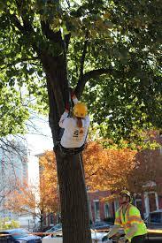 kids tree climb at the u s national arboretum casey trees