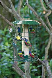 How To Attract Indigo Buntings To Your Backyard Learn How To Attract Painted Buntings