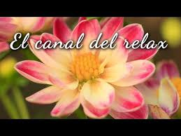 imagenes flores relajantes música relajante para trabajar o estudiar 4 relax music for