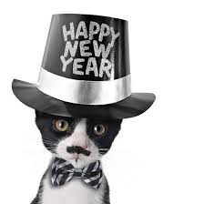 new years bow tie black and white kitten with moustache bow tie and happy new