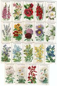 native english plants best 25 cottage garden plants ideas on pinterest cottage