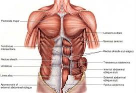 of structure function the pecs
