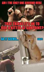 Im I The Only One Meme - am i the only one around here that thinks it s ok to rob a kitten