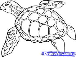 coloring engaging drawings turtles completed coloring