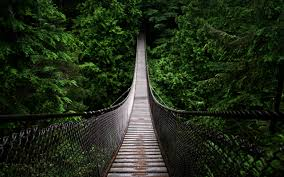 bridges forests green nature paths trees walldevil