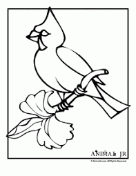 christmas coloring pages winter birds animal jr