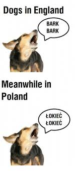 Dog Barking Meme - dogs in england bark meanwhile in poland lokiec lokiec poland meme