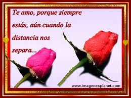 imagenes de amor con rosas animadas imagenes de lindas rosas animadas con frases imágenes de amor con