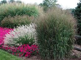 landscape grasses design home ideas pictures homecolors