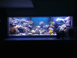 led reef lighting reviews orphek led review aquarium led lighting