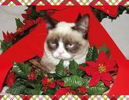 Christmas Grumpy Cat Meme - grumpy cat mistletoe meme generator imgflip