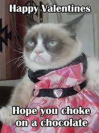 1460 best grumpy cat images on pinterest funny stuff grumpy cat