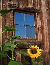 Pictures Of Old Barn Doors Best 25 Old Barns Ideas On Pinterest Farm Pictures Pictures Of