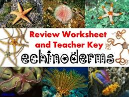 echinoderm review worksheet for biology or zoology tpt