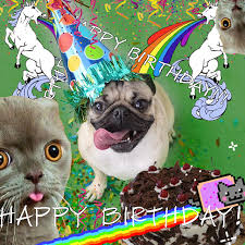 Happy Birthday Pug Meme - happy birthday pug gif on imgur