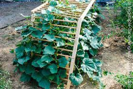 Make Your Own Cucumber Trellis Garden Trellis Ideas