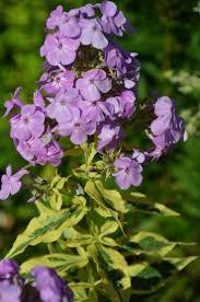 6832 best purple passion iii images on pinterest lavender