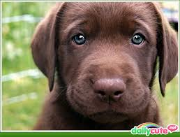 Puppy Eyes Meme - oh my goodness adorable so cute pinterest puppy eyes