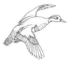 jack u0027s landing bird sketches