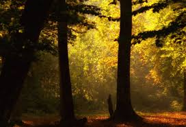 forest misty autumn trees hd images free download forest