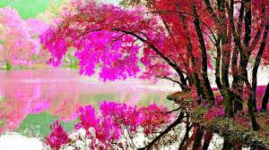 blossom colorful spring lake flower nature free