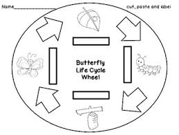 butterfly life cycle freebie by happily ever after education tpt