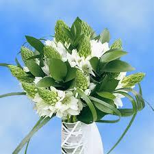 of bethlehem flower best of bethlehem flowers global