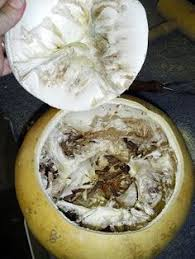 diy how to preserve ornamental gourds gourds can be dried and
