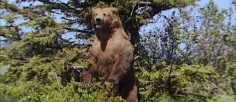 Animal Planet Documentary Grizzly Bears Full Documentaries - grizzly man kcet